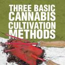 I tre principali metodi di coltivazione della Cannabis