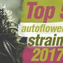 Top 5 delle Migliori Varietà di Cannabis Autofiorenti del 2017