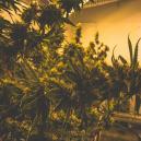 Come Gestire il Caldo Estivo nella Grow Room Indoor