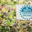 Metodi di Controllo Biologico dei Parassiti nelle Colture di Cannabis