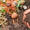Cannabis e Compost Fatto in Casa: Come Farlo, Conservarlo ed Usarlo