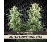 Autoflowering mix (10 semi)
