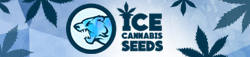 ICE Cannabis seeds