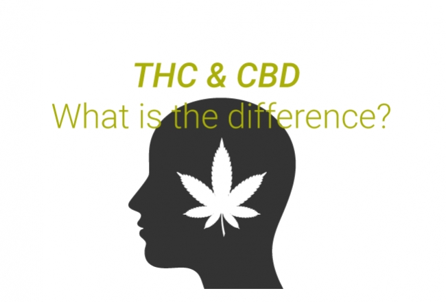 Qual È La Differenza Tra THC e CBD?