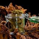 Una Guida per Essiccare e Conciare Correttamente la Cannabis