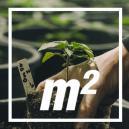 Quante Piante di Cannabis Per Metro Quadrato?
