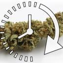 Come Seccare Rapidamente i Tuoi Fiori di Cannabis