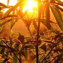 Coltivare Cannabis all'Aperto: Di Quanto Sole Hanno Bisogno