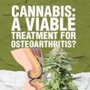 Cannabis: un trattamento efficace per l'osteoartrite?