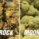 Moonrocks Vs Sunrocks – Troppo Potenti?