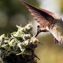 Come Fermare Gli Uccelli Dall'Appostarsi Intorno Alle Piante