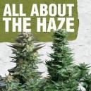 Tutto sulla Haze