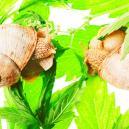 I 10 Motivi Principali Per La Crescita Lenta Della Cannabis