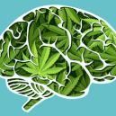 Come Agisce La Cannabis Sul Vostro Cervello