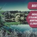 Le Migliori Varietà Di Cannabis Indica Per Climi Settentrion