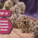 Le 10 Varietà Di Cannabis Più Saporite Di Zambeza