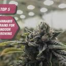 Le Migliori 5 Varietà Di Cannabis Da Coltivare Indoor