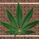 Che Cosa Sono le Foglie a Ventaglio della Cannabis?
