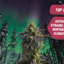 Le 5 Migliori Varietà Sativa per i Climi Nordici